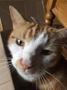 Cat sitter bollington